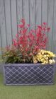 Garden planter withcAstilbie Youngique Pink Photonia Pink Marble and Rhododendron Wren<br /><br />www.heysgroundcare.co.uk